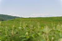 Grassland and mountain Stock photo [1607431] Prairie