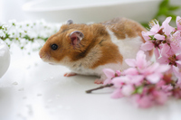 Hamster and flower Stock photo [1608064] Animal