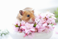 Hamster and flower Stock photo [1608068] Animal