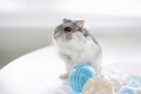 Hamster Stock photo [1608085] Animal