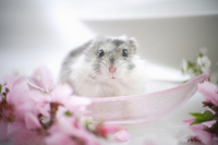 Hamster and flower Stock photo [1608087] Animal