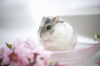 Hamster and flower Stock photo [1608088] Animal