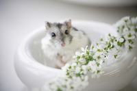 Hamster and flower Stock photo [1608089] Animal