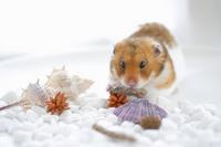 Summer of hamster Stock photo [1608100] Animal