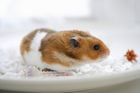Summer of hamster Stock photo [1608210] Animal