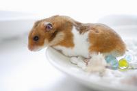 Summer of hamster Stock photo [1608213] Animal