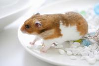 Summer of hamster Stock photo [1608217] Animal