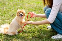 Female dog Stock photo [1699471] Female