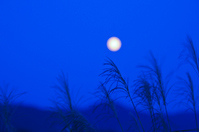 Japanese pampas grass and full moon Stock photo [1700371] Japanese