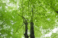 Fresh green of large tree Stock photo [1706148] Fresh