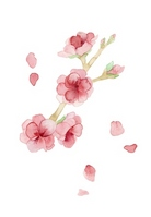 Peach Blossom [1709863] Peach