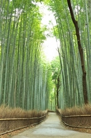 Road of bamboo forest Stock photo [1777350] Bamboo