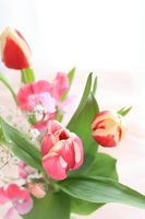 Tulip table bouquet Stock photo [1879440] Tulip