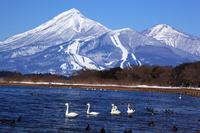 Bandai and Lake Inawashiro of swan Stock photo [1893545] Fukushima