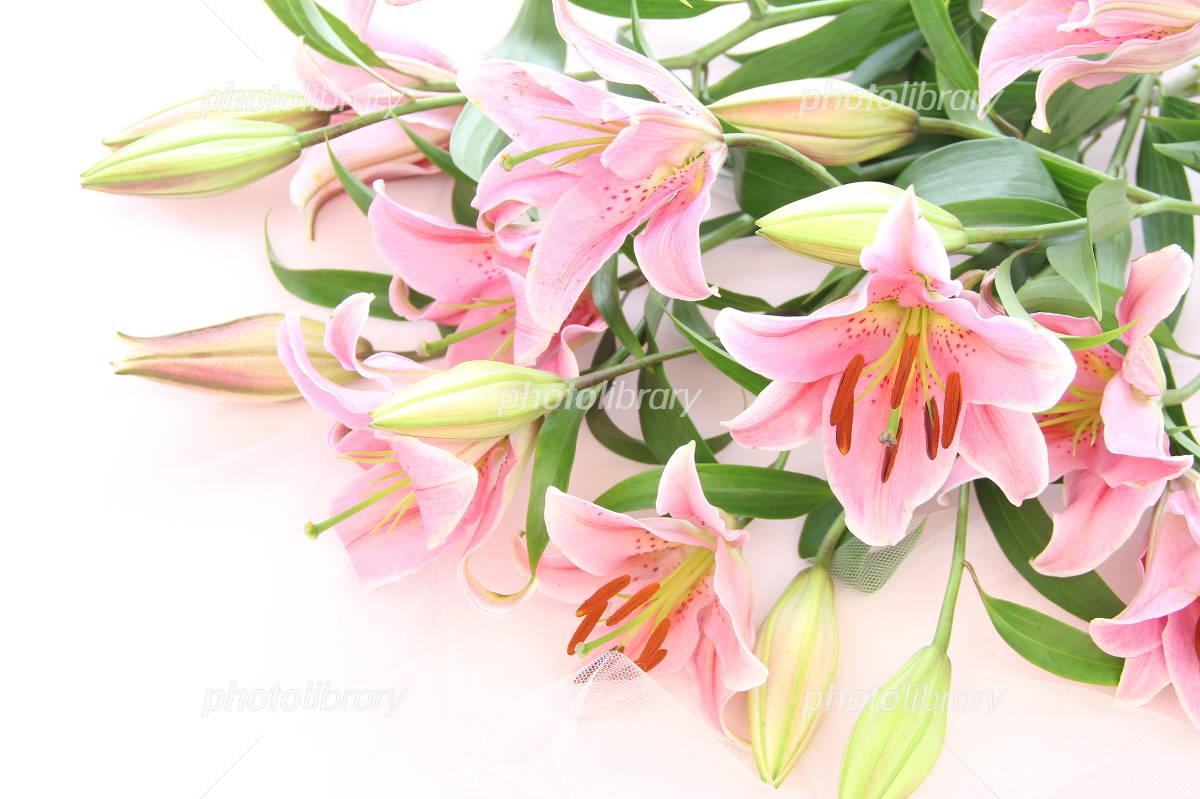 Lily bouquet Photo