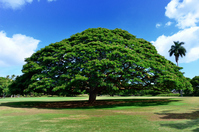 Tree of this tree that do Stock photo [2099893] American