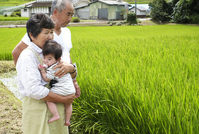 Family overlooking the rice fields Stock photo [2102677] Rice