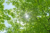 Fresh green in the sunshine Stock photo [2196556] Fresh