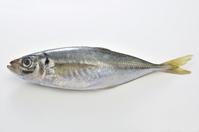Horse mackerel white back Stock photo [2198058] Taste