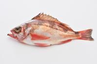 Rockfish white back Stock photo [2199513] Rockfish