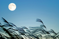Full moon and pampas grass Stock photo [2206955] Full
