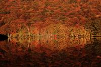 Autumn leaves of Tsutanuma Stock photo [2209998] Tsutanuma