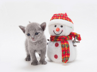 Russian Blue kitten and snowman toy Stock photo [2210552] CAT