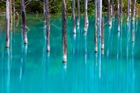 Biei blue pond Stock photo [2211688] Hokkaido