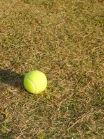 Tennis ball and lawn Stock photo [2212698] Tennis