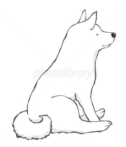 座る日本犬白 イラスト素材 2466666 フォトライブラリー