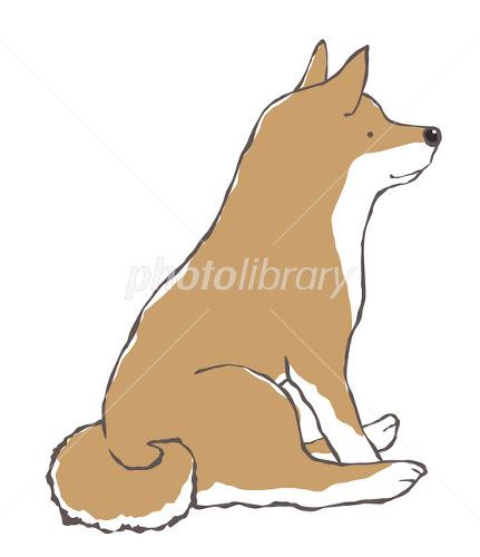座る日本犬柴犬 イラスト素材 2466684 フォトライブラリー