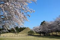 Suizenji Park Fuji Tsukiyama and cherry Stock photo [2455760] Japan