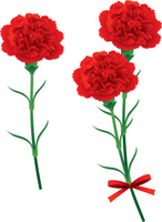 Carnation red Mother's Day [2462546] Mother's