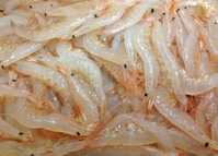 White shrimp stock photo