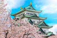 Sakura of Nagoya Castle Stock photo [2469622] Nagoya