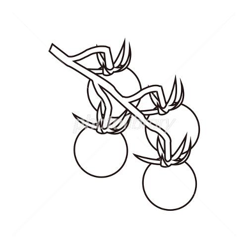 ミニトマト(塗り絵 ...