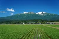 Early summer of paddy and Mt.Chokai Stock photo [2581531] Yamagata
