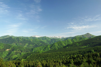 Forest of fresh green Shirakami beech Stock photo [2585133] Mori