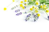 Chamomile and lavender Stock photo [2588701] Lavender