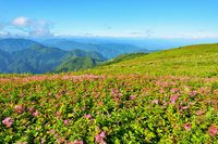 Summer of Ibuki Stock photo [2680466] Mt.