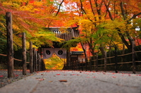 Autumn leaves of Komyoji Stock photo [2680974] Kyoto