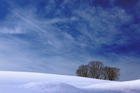 Snow scene of grassland Stock photo [2683314] Yamagata