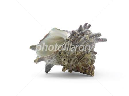 栄螺の殻 写真素材 [ 2773200 ] ...