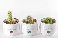 Mini cactus Stock photo [2762102] Cactus