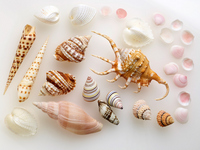 Various shells Stock photo [2767144] Sea