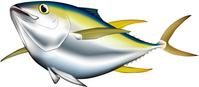 Yellowfin tuna [2767699] Tuna
