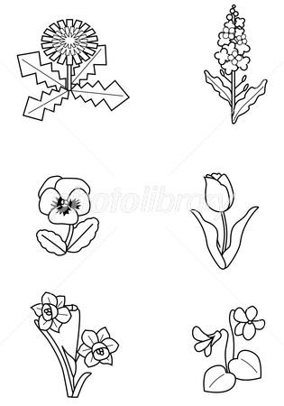春の花塗り絵 イラスト素材 2854502 フォトライブラリー