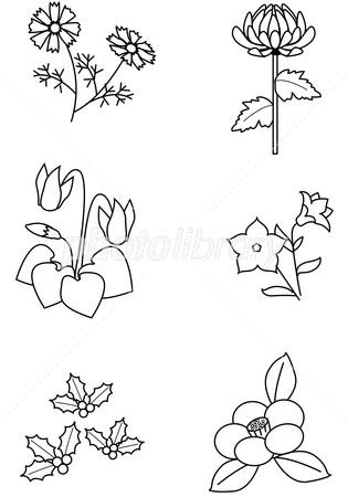 秋冬の花塗り絵 イラスト素材 2854507 フォトライブラリー