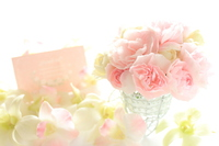 Pink carnation and card Stock photo [2856109] Carnation