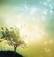 Starry grove Stock photo [2856954] Star